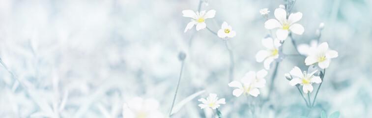White small flowers panoramic border, banner, wedding romantic background. Flat lay.