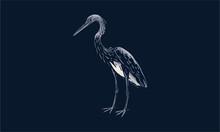 White-bellied Heron On Black Background