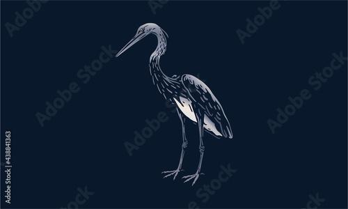 Fotografia, Obraz White-bellied heron on black background