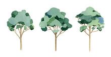 Eucalyptus Tree Set. Watercolor Illustration. Hand Drawn Green Tall Aroma Plant. Eucalyptus Tree Natural Element Isolated On White Background