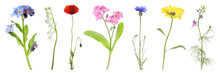 Collection Of Different Beautiful Wild Flowers On White Background. Banner Design