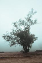 Mañanas De Pueblo Con Niebla!!!