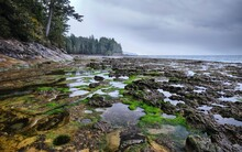 Tide Pools On Botanical Beach Near Tofino. Pacific Rim Trail On Vancouver Island. British Columbia. Canada