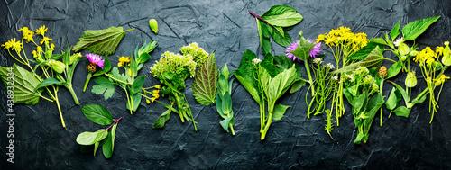 Billede på lærred Natural medicine,fresh plants,healing herbs