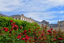 パリのパレ・ロワイヤルに咲いているバラ、2021年5月28日撮影。