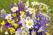 Summer Flowers Background Close Up. Beautiful White Yellow Blue Violet Purple Bouquet By Florist With Daisy, Chamomile, Lupin And Pansy Flowers
