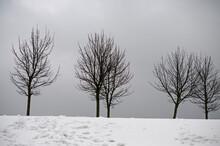 Shades Of Gray. Bare Trees ,gray Sky And Snow
