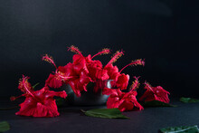 Red Hibiscus Flower And Leaf, Red Hibiscus Flower In Steel Pot Side View, Chembarathi Flower, Red Hibiscus Flower And Leaf In Dark Background, Light And Shade Photography