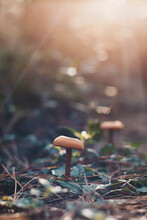Mushrooms In The Forest With Sun Glow