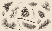 Hand Drawn Set Of Pine, Spruce, Fir Tree Needles, Branches And Cones. Vector Illustrations.