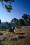 góry krajobraz zwierzęta krowy widok wiosna