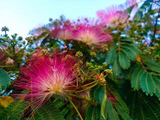 drzewo kwiaty roślina liście zieleń wiosna
