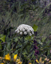 Flor En Primer Plano Y Con El Fondo Desenfocado