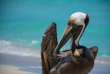 Pelican 5