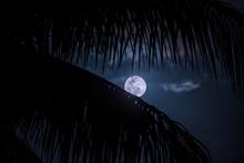 USA, Florida, Boca Raton, Full Moon Behind Palm Leaves