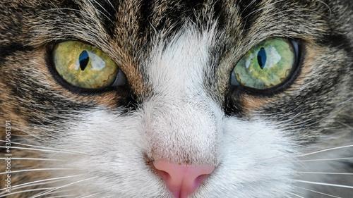 Fotografia close up of a cat