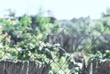 Fencing A Vegetable Garden In The Village Of Ukraine.