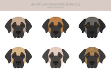 Anatolian Shepherd All Colours Clipart. Different Coat Colors And Poses Set