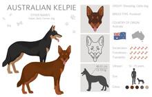 Australian Kelpie All Colours Clipart. Different Coat Colors And Poses Set