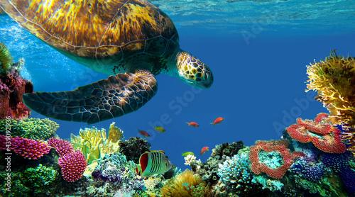 Fotografie, Obraz underwater sea turtle swims
