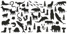 Collection Of Animals. Hand Drawn Silhouette Of Animals Which Are Common In America, Europe, Asia, Africa. Black Icon Set Isolated On A White Background