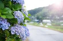 梅雨素材バナーで使いやすい雨上がりの紫陽花(アジサイ)と田舎道 コピースペースあり