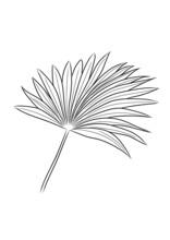 Line Art Tropical Plants Clipart
