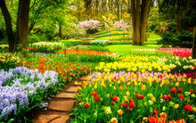 Flower Park And Forest For Wallpaper