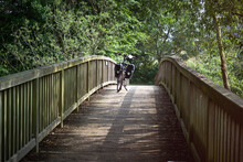 Black Bicycle On A Bike Ride Stands On A Curved Bridge Made Of Wooden Planks Under A Green Canopy Of Leaves