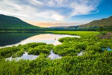 Lake View Full Of Water Hyacinth, Phitsanulok, Thailand
