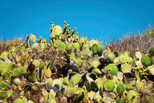 Cactus On Hill With Blue Sky