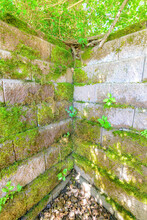 The Corner Inside Corner Of An Ancient Stone Wall. The Stone Is Mostly Covered With Moss And Other Vegetation. Bright Day. Leaves Below, Trees Above.