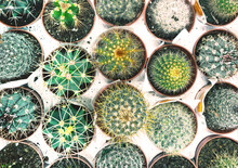 Flat- Lay With Potted Cacti