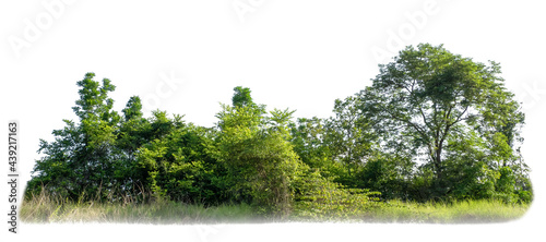 Fotografering Green trees isolated on white background
