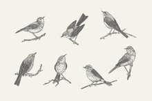 Set With Birds. Black And White.