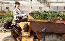 Portrait Of Chinese Female Farmer Working On Farm Tractor In Greenhouse. High Quality Photo