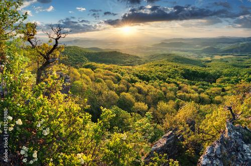 Obraz na plátně Green trees on mountain under dramatic spring sunset