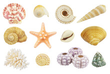 Collection Of Different Sea Shells, Sea Urchins And Starfish Isolated On White Background