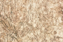 Light Brown Wood Tree Profile Textured Surface With Gnarled Age Rings Pattern