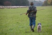 Sheep, Lambs, Herd, Flock, Shepherd On A Pasture