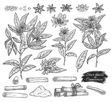 Anise And Cinnamon Spices Set Botanical Sketch Vector Illustration Isolated.