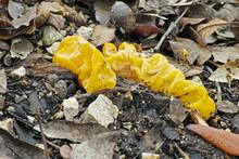 Mushroom Yellow Brain