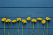 Beautiful yellow dandelions on blue wooden table, flat lay. Space for text
