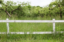 White Fence In Farm Field Ranch. Wooden Rustic Fence In Village. Green Pastures Of Horse Farms. Summer Garden In Backyard And Wooden Fence. Fence On Green Grass And The Trees Behind.
