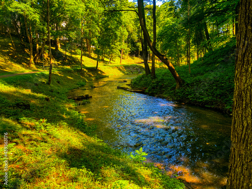Tela river in the woods