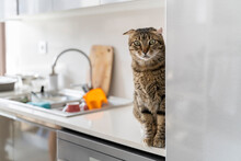 Cute Cat On Top Of Counter In Kitchen