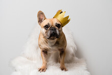 French Bulldog Dog With A Crown