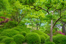 Amazing Bright Green Bushes And Trees In The Garden. Wallpaper Concept.