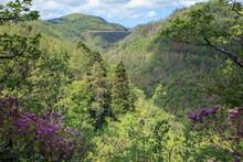 Devil's Bridge Falls And Nature Trail In Rhaeadrau Pontarfynach - Wales. Summertime Foilage On The Nature Trail Through The Rheidol Gorge.
