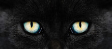 Black Cat Eyes Looking At Camera, Colorful Eye Close-up. Dark Witch Cat. Halloween. Folklore, Superstition And Mythology. Black Cats Be Witches' Familiars